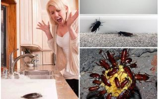 Блаттофобия или боязнь тараканов