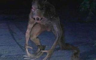 Чупакабра  нападает на людей и животных
