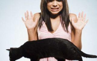 Страх перед животными или зоофобия