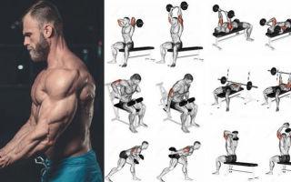 Необычная методика упражнений на бицепсы и трицепсы