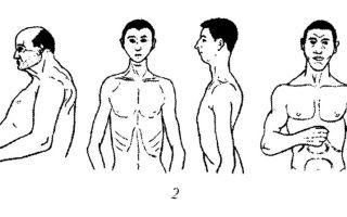 Типология кречмера – пикнический, атлетический и астенический тип телосложения.