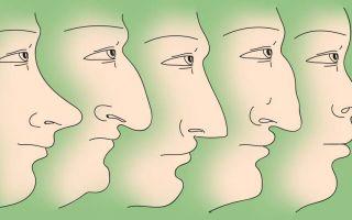 Характер и форма носа взаимосвязаны?