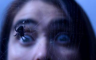 Арахнофобия: боязнь пауков / страх перед пауками